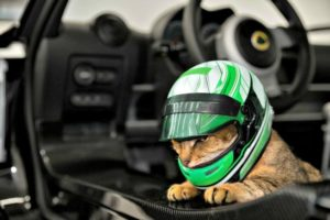 Lotus takes the lead with new cat helmets (April Fools) 1