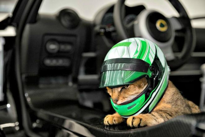 Lotus takes the lead with new cat helmets (April Fools) 3