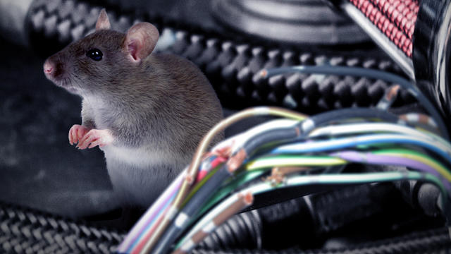 Episode 28, Rats eating cars, winter driving, Genesis shines 3