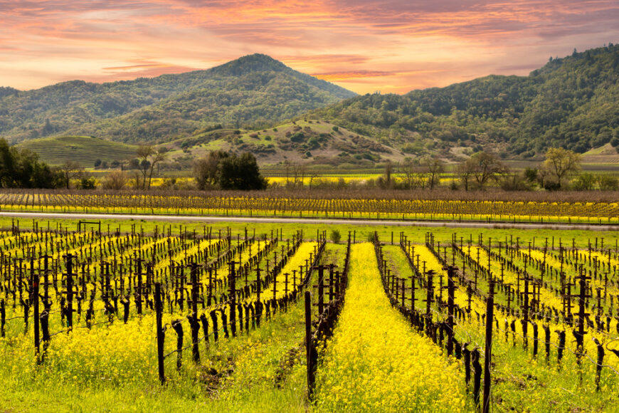 The Napa Valley has earned top United States honors in global best road trips survey