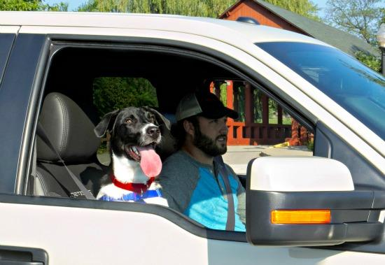 Jinx the dog and human companion in a Ford pickup truck.